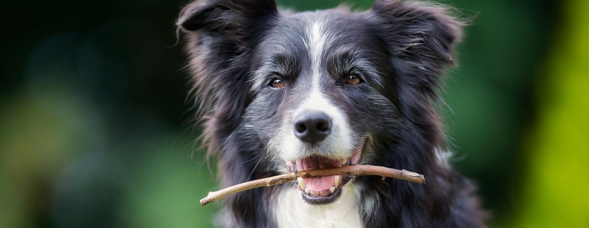 olddog-desktop-hero