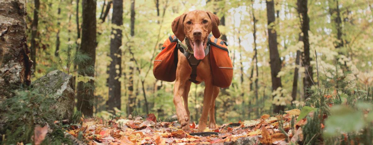 outdoor-adventure-gear-hero