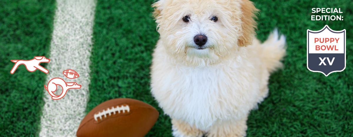 puppybowl_custom_hero