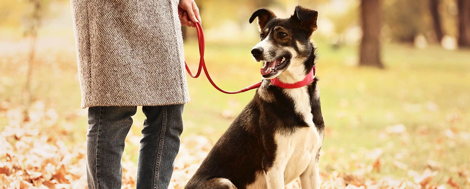 Should You Get a Breakaway Collar?