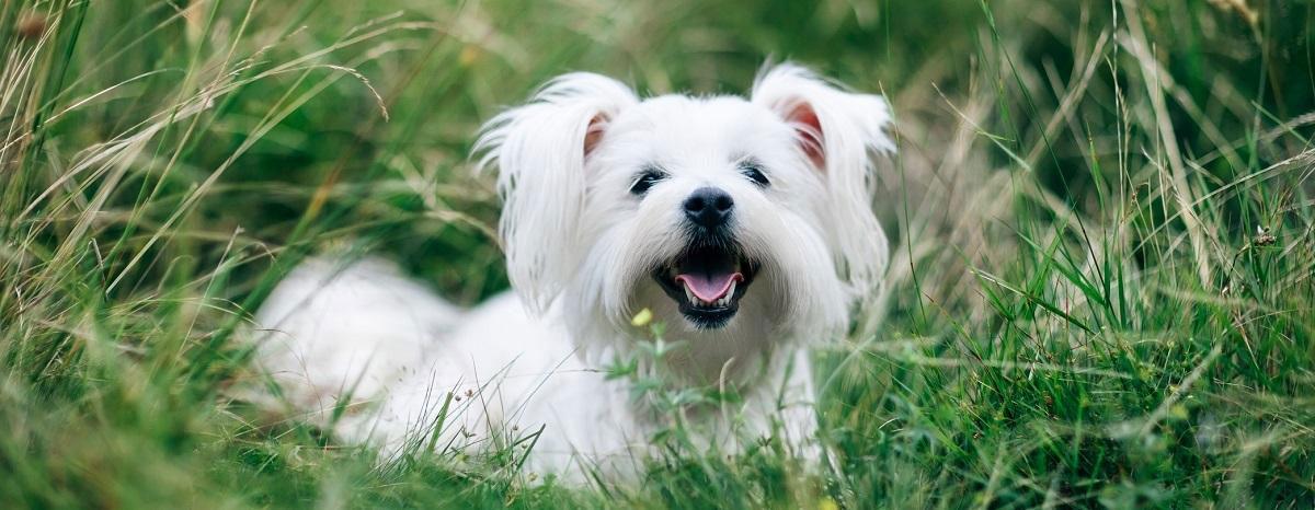 smiling-dog-in-grass-hero