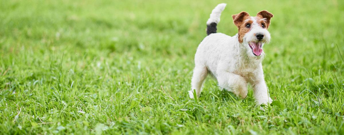 spring-dog-grooming-hero