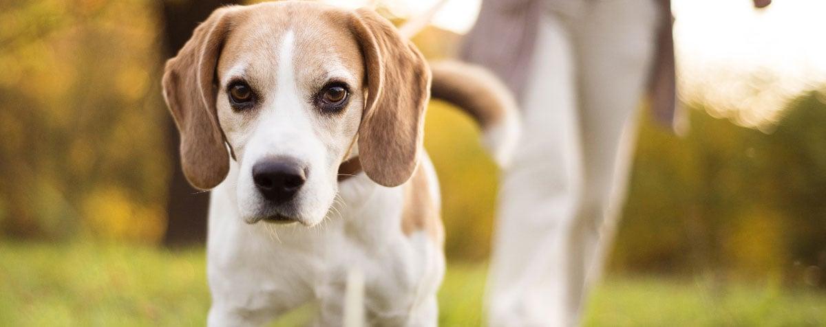 train-senior-dog-hero