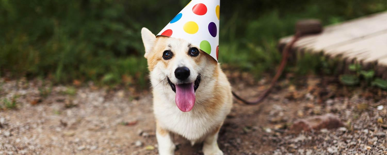 The Ultimate Dog Party Checklist