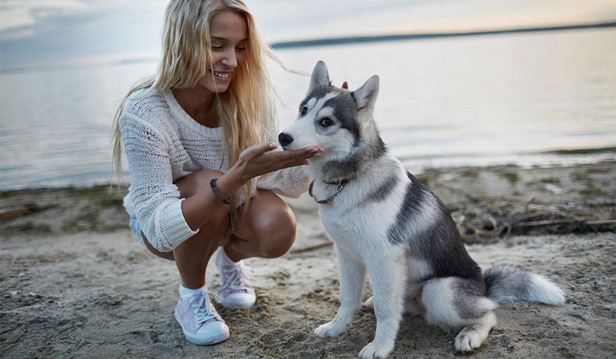 weekend-dog-dates-hero