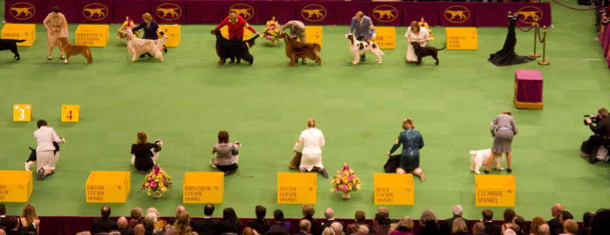 westminster-dog-show-hero