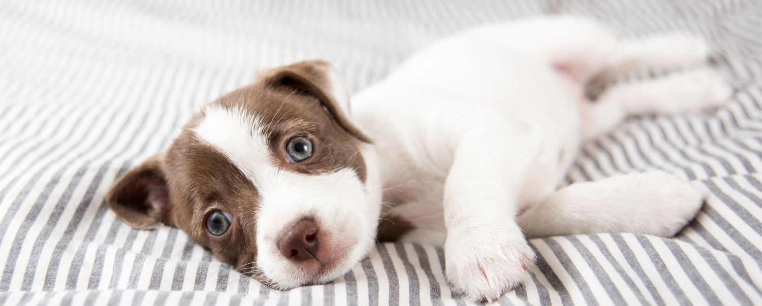 When Do Puppies Lose Their Baby Teeth?