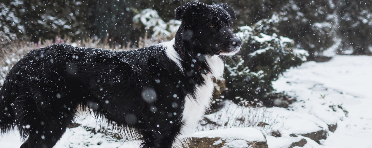 winter-adventures-hero