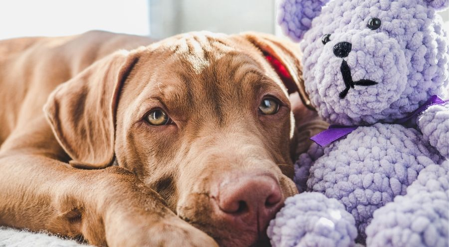 Can You Give Your Dog Benadryl?