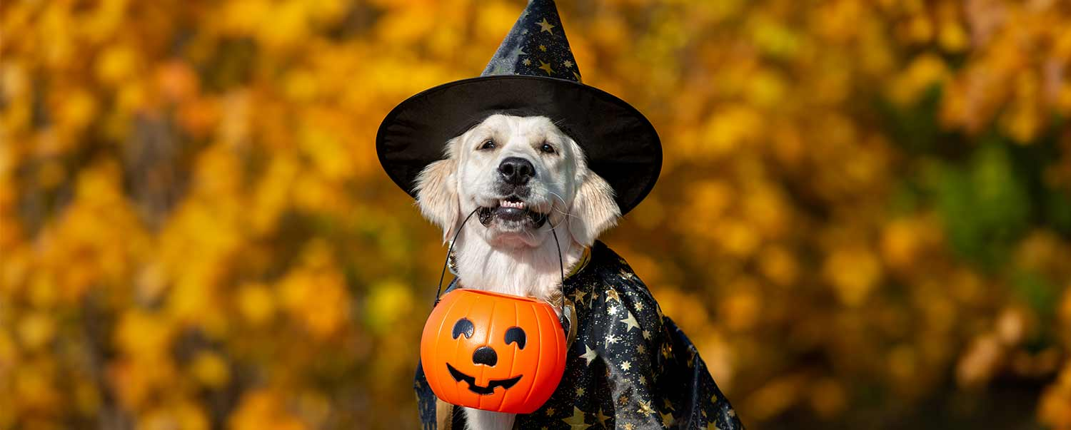 fun-dog-halloween-costume-ideas-1